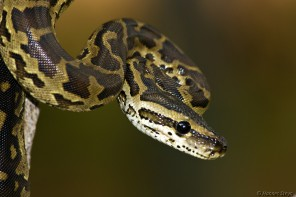 Exotic animals: Should they be allowed in Canada? (Seventh in a series)